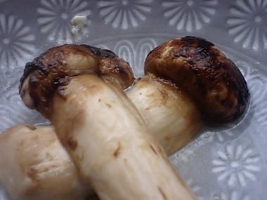 Matsutake01